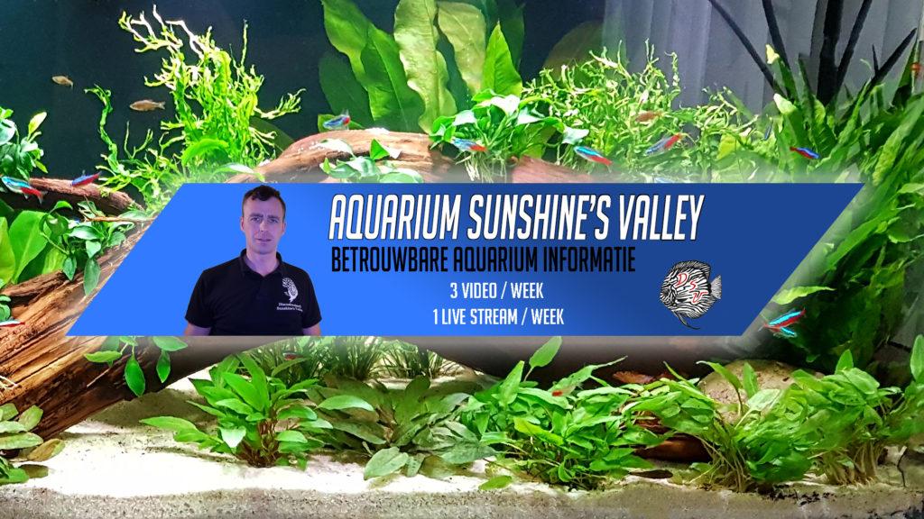 Abonneer je vandaag nog op mijn YouTube Kanaal Aquarium Sunshine's Valley (klik op afbeelding)