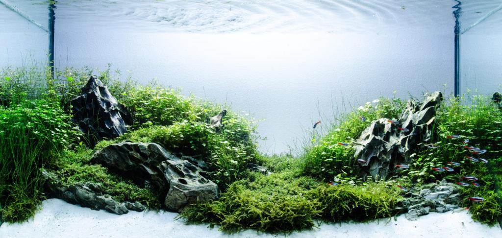 Wat een prachtige aquascape! Het is een ware kunst wil je jouw aquarium inrichten op deze manier!