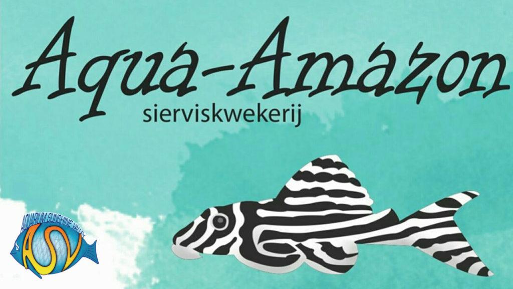 Aqua Amazon is één van de mooiste aquarium winkels met tropische vissen uit de Amazone (Zuid-Amerika). Zeker een bezoekje waard als je van die biotoop houdt. Bovendien is Aqua Amazon ook nog een winkel met passie en liefde voor het aquarium en krijg je goed en degelijk advies, bovenop de mooie en gezonde vissen.